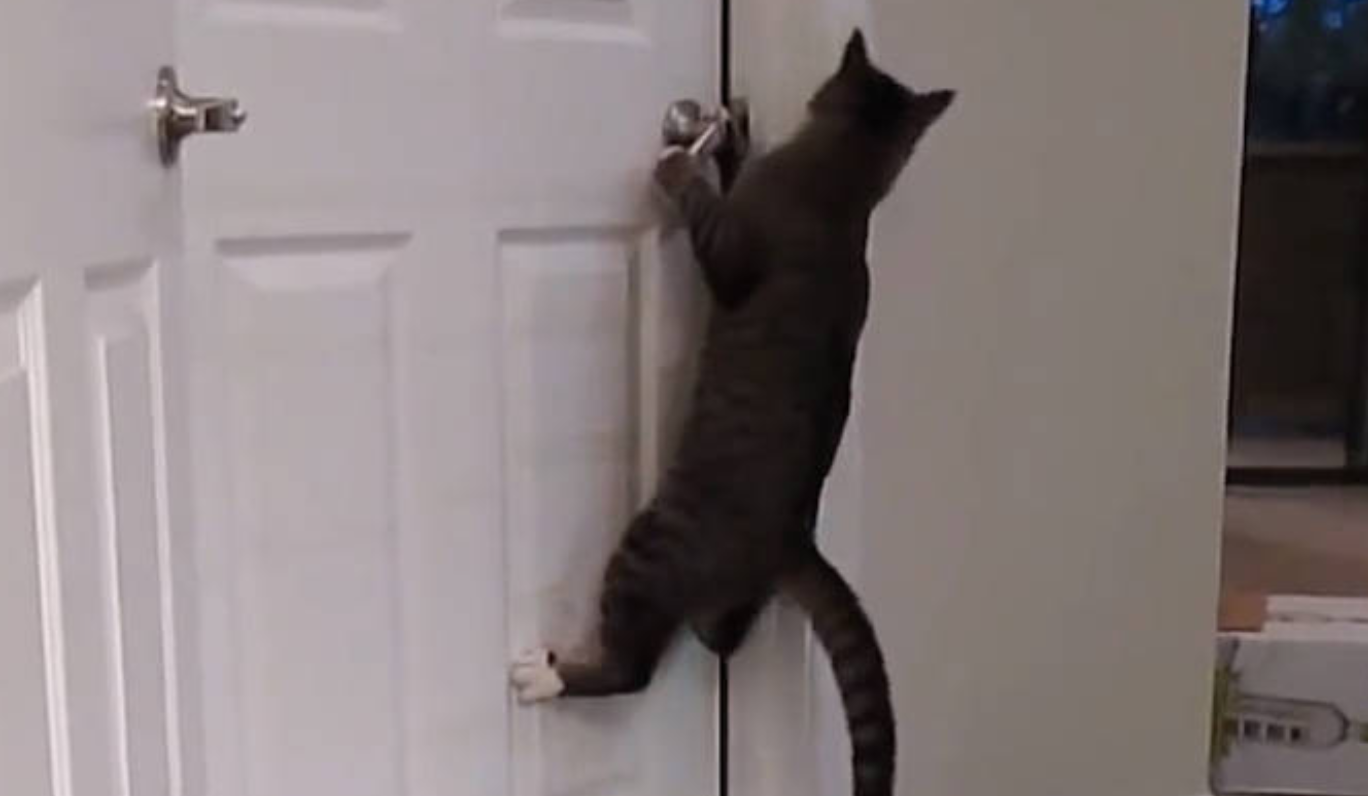 Here's How This Clever Cat Opens Doors