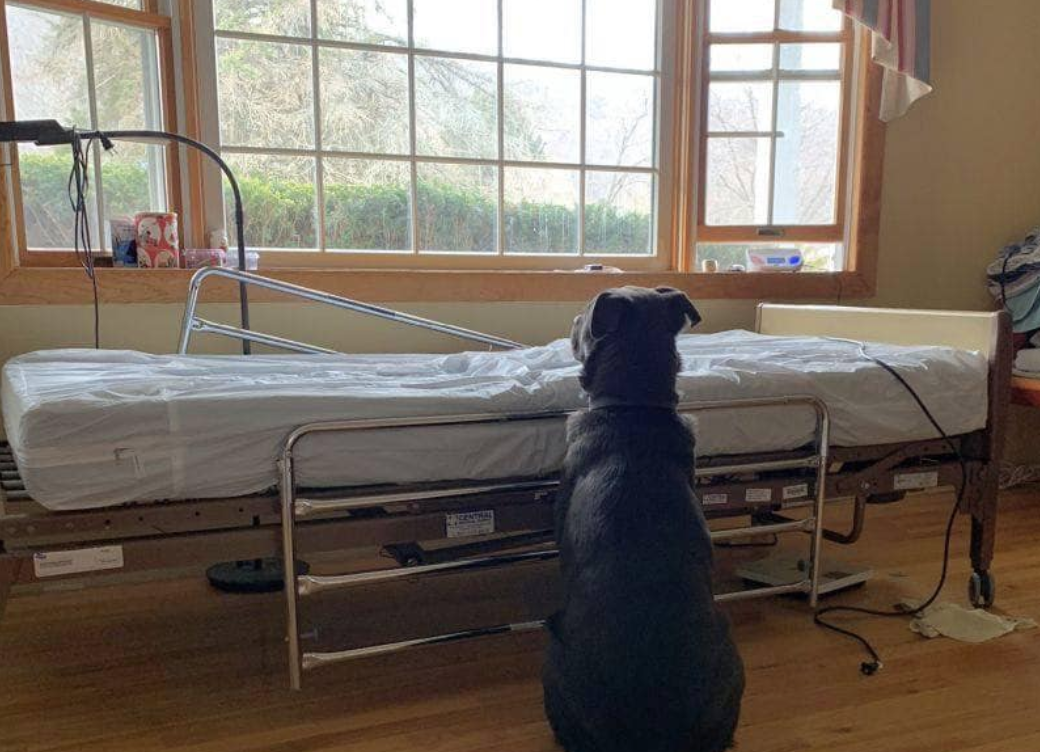 Dog Stays Beside Owner's Bed Until He Realizes He's Not Coming Back