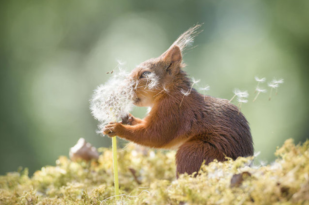 Photographer waits hours to make best squirrel pictures you'll ever see