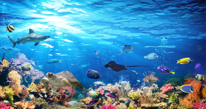 Can we bring the oceans back to life?