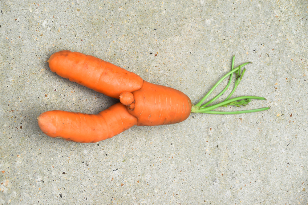 The funny-looking carrot that sheds a light on a larger issue