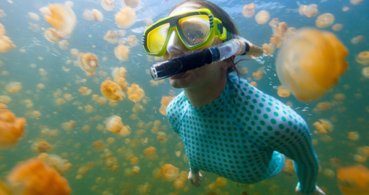 Why you need to visit Jellyfish lake